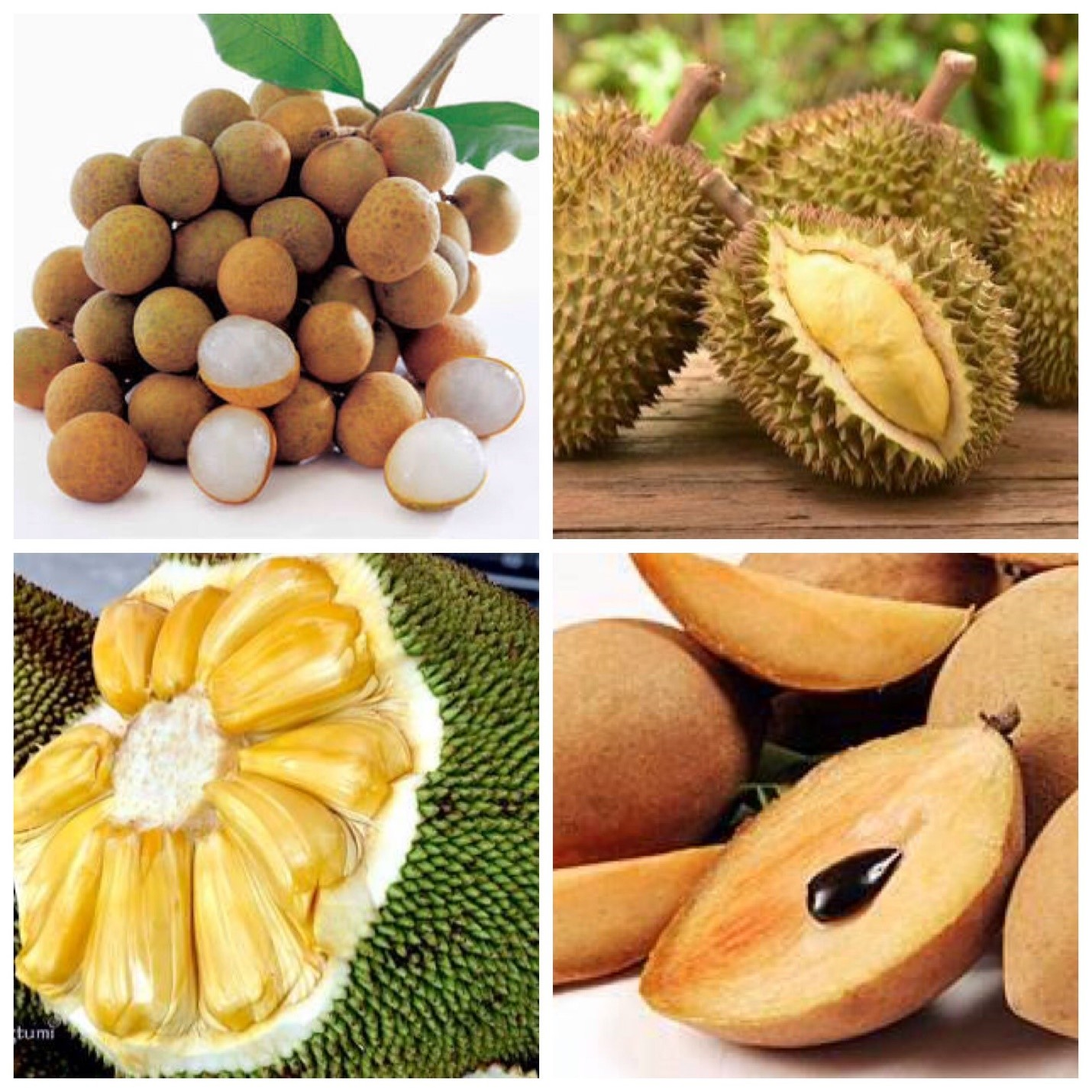 Penderita Diabetes, Sebaiknya Batasi Konsumsi Buah-buahan Ini!